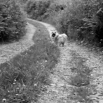 A Walk Down The Lane by Jakemc1872