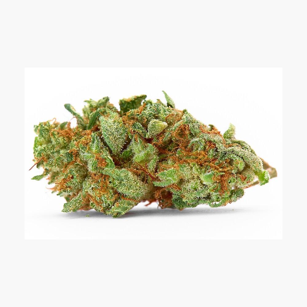 Raum Königin Marihuana Fotodruck