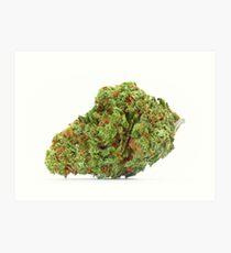 Lámina artística Space Queen Marijuana
