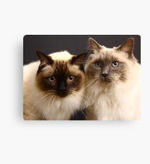 Lienzo gatos ragdoll