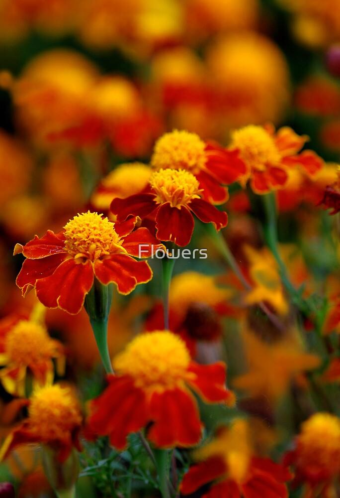 Orange by Flowers