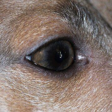 Through Guido's Eye by eegibson