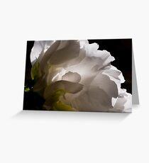 White Tree Peony Greeting Card