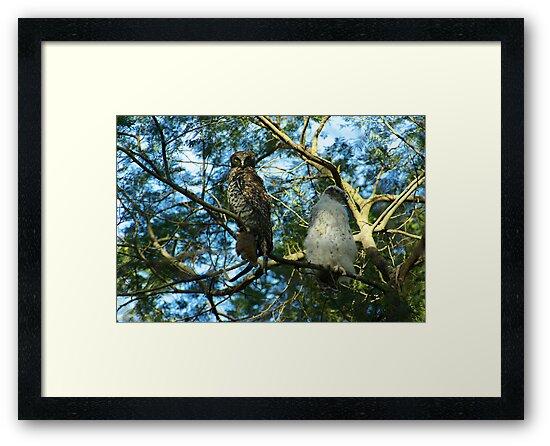 Powerful Owl Family 34 by Biggzie