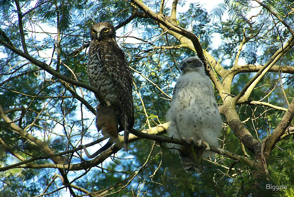 Powerful Owl Family 35 by Biggzie