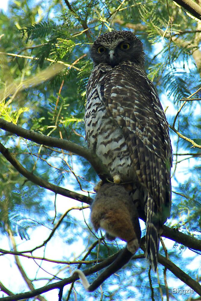 Powerful Owl Family 37 by Biggzie