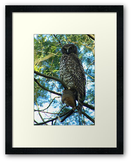 Powerful Owl Family 37 by Biggzie