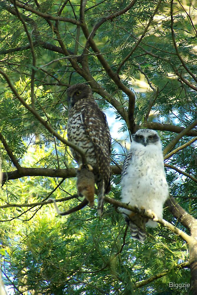 Powerful Owl Family 43 by Biggzie