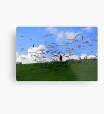 Feed the Birds Metal Print