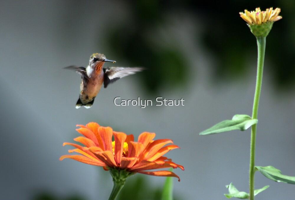 Ohhhhhhh!  I Like Orange! by Carolyn Staut