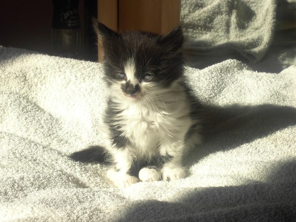 KITTY by CHASWICK