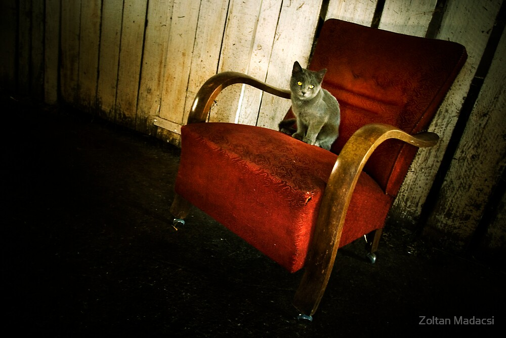Cat in the Armchair by Zoltan Madacsi