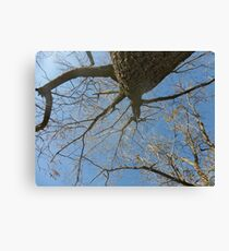 Looking Up While Sitting Under A Tree Canvas Print
