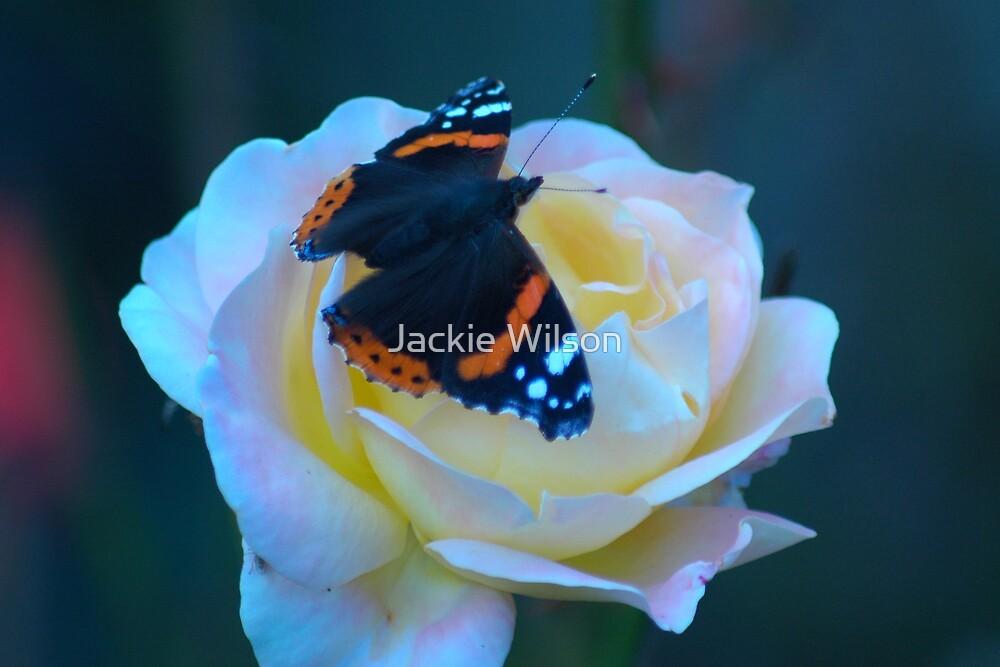Butterfly by Jackie Wilson