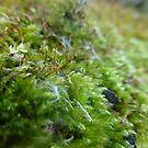 Moss Up Close by silverdragon