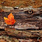 """""""I See you"""" said the Log to the Leaf... by Poete100"""