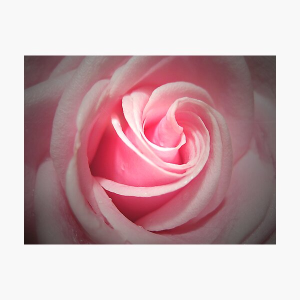 Pink Delight Photographic Print