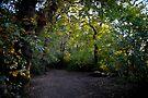 Sunlit Dulwich Woods by DonDavisUK
