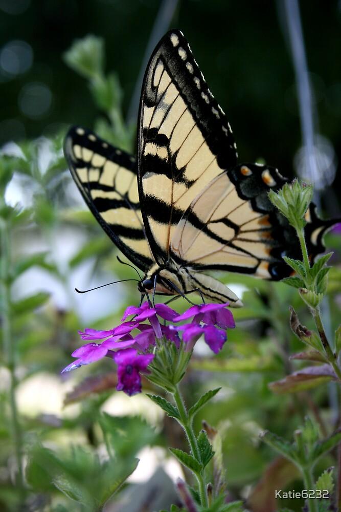 Beautiful Swallowtail  by Katie6232