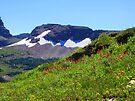 Glacier Wildflowers 2 by Tamara Valjean