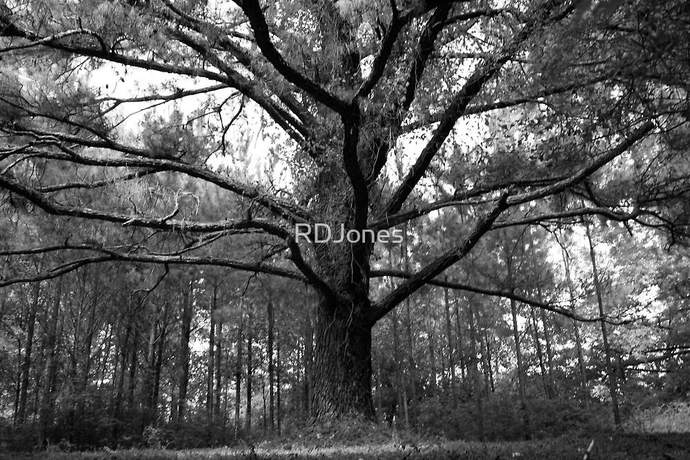 Mother Tree by RDJones