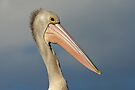 Australian Pelican by Robert Elliott