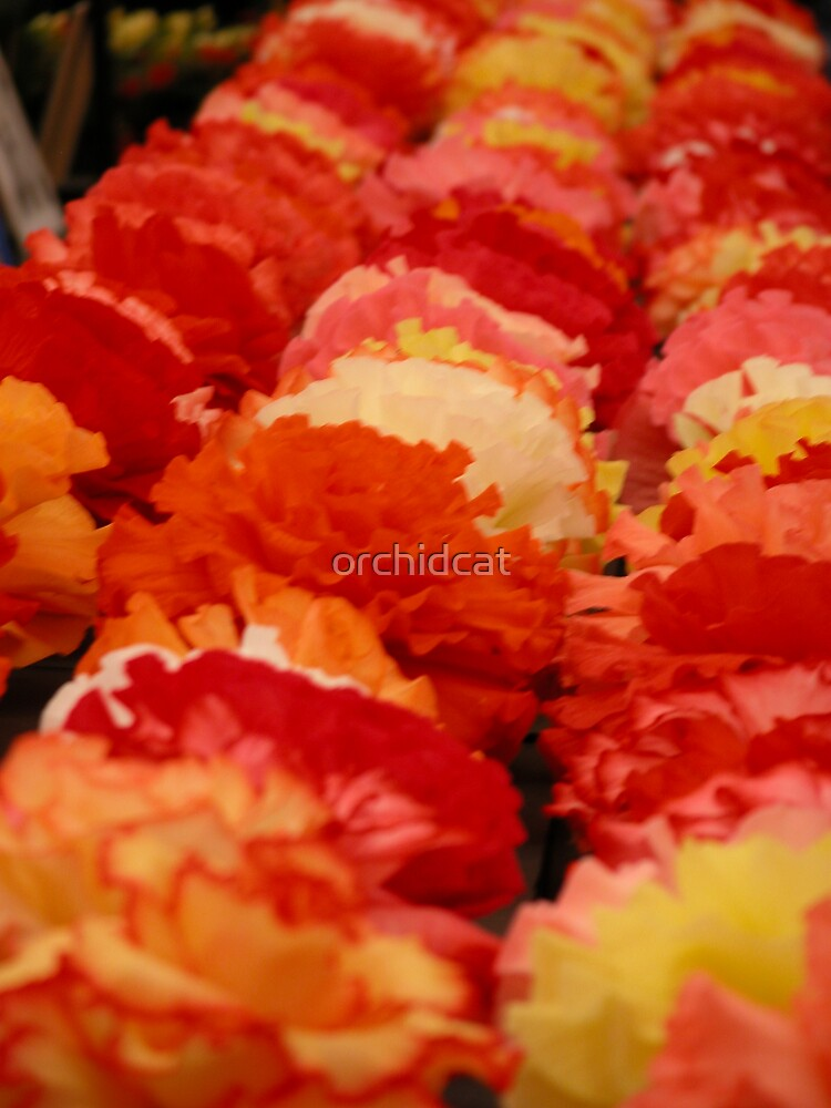 Begonias by orchidcat