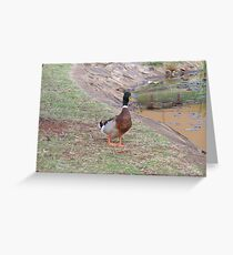 Lone Duck 1 Greeting Card