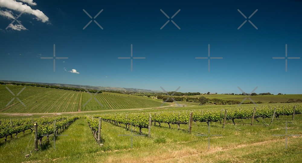 McLaren Vale, South Australia by SusanAdey
