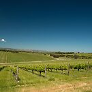 McLaren Vale, South Australia by SusanAdey
