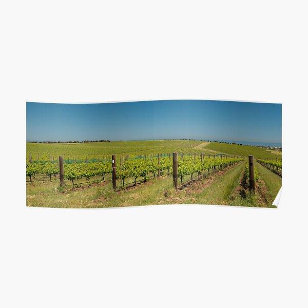 Vineyards of McLaren Vale, South Australia Poster