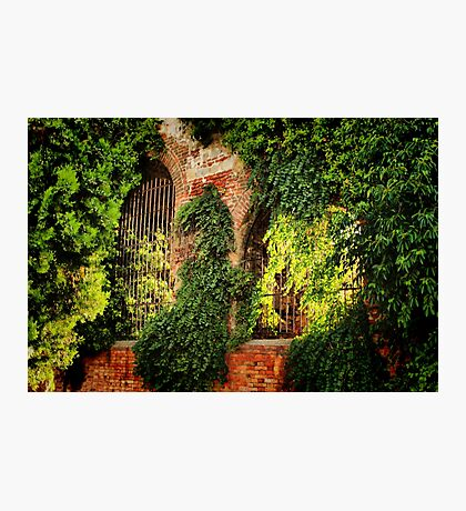 Garden Wall Photographic Print