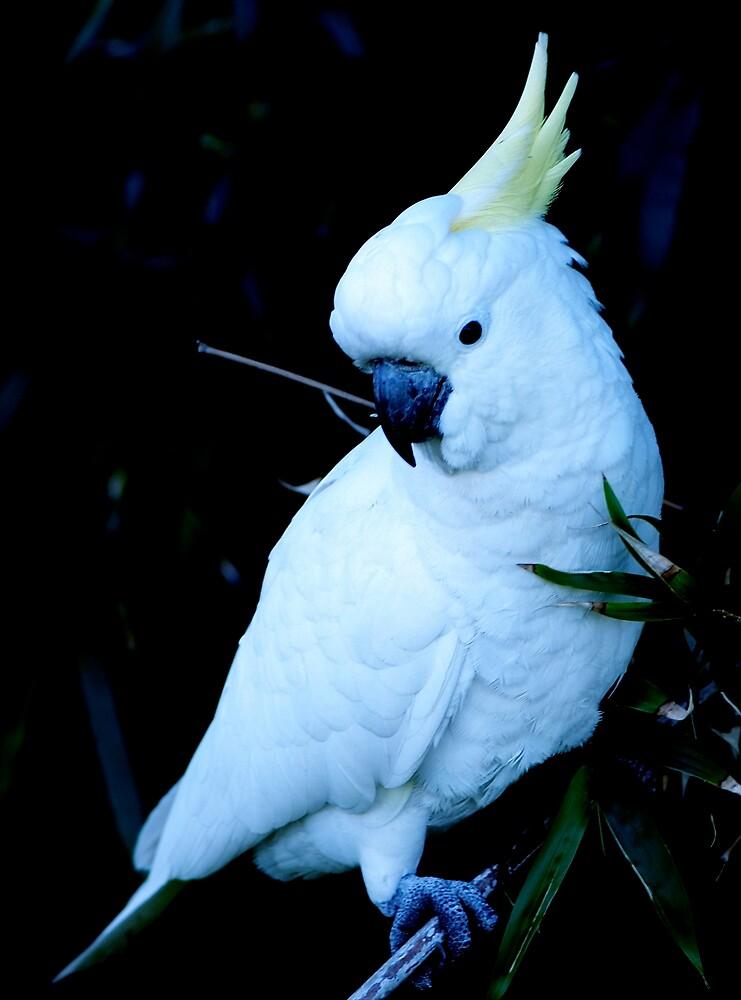 a wonderful bird by alfarman