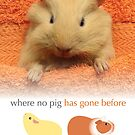 Where no pig has gone before by guineapigempire