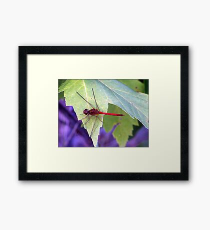 They Call Me Red! Framed Print