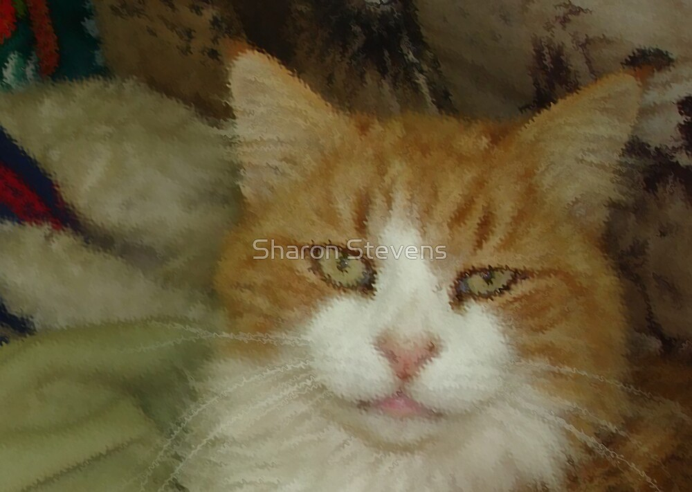 My Cat Kenny by Sharon Stevens