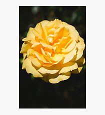 The Flower Photographic Print