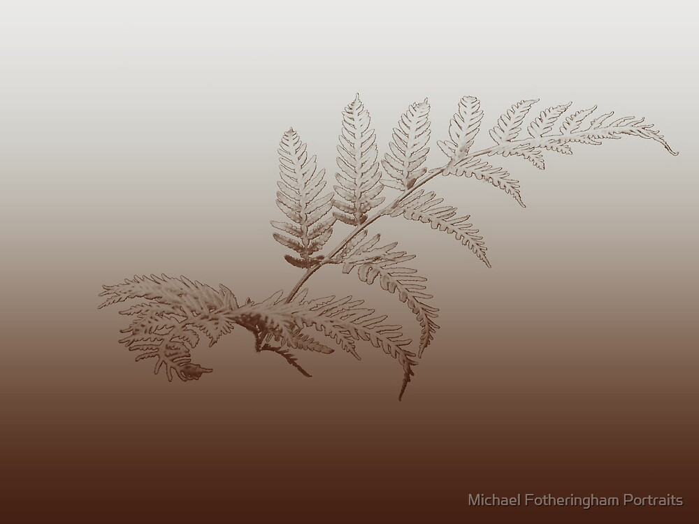 Frond by Michael Fotheringham Portraits