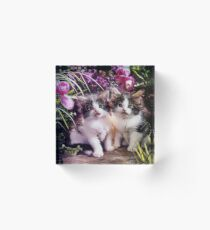 Kittens Acrylic Block