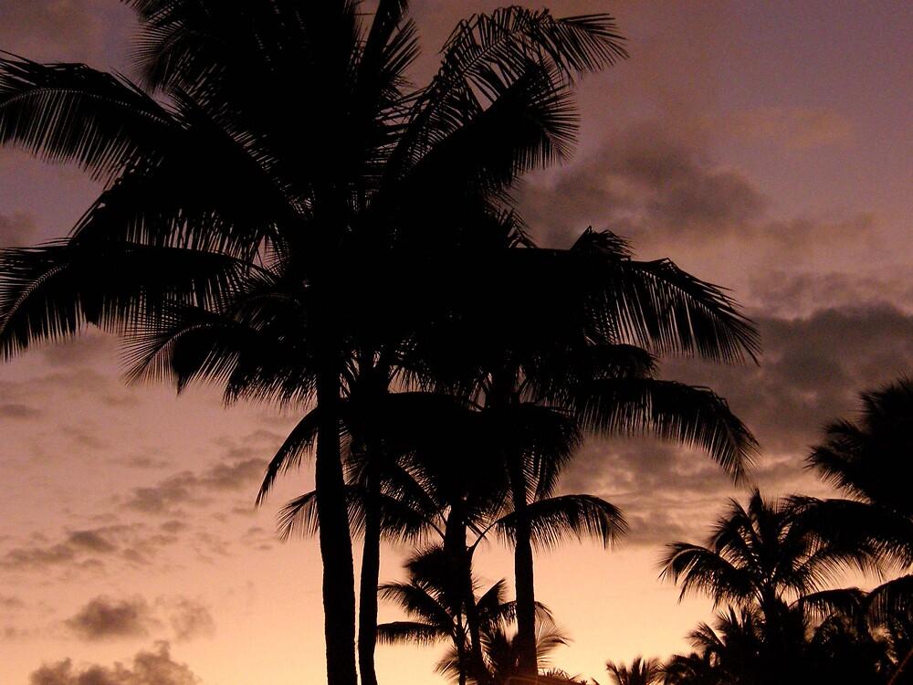palms by Aimerz