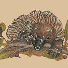 Echidna - Native Australiana by Jellyscuds