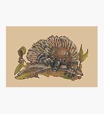 Echidna - Native Australiana Photographic Print