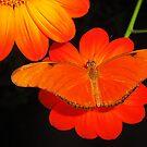 Orange Double by Dawn B Davies-McIninch