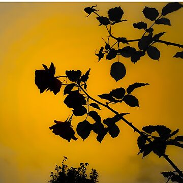 Ophelia rose by themonastery