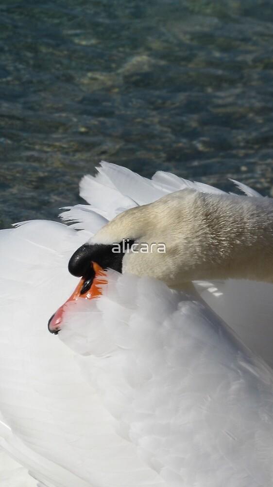 swan by alicara