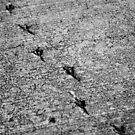 Bird footprints in concrete von germanX