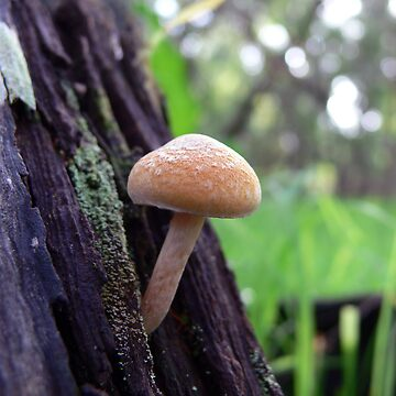 fungi by shirleyscott