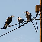 Magpie Conference by Paul Weston