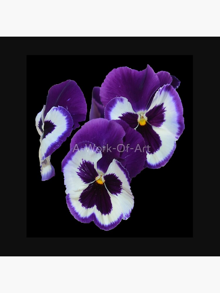 Pansies Exquisite Purple White Eye Candy, de A-Work-Of-Art