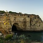Sea Cave and Agave Bloom Spike - the Magic of Algarve Portugal by Georgia Mizuleva